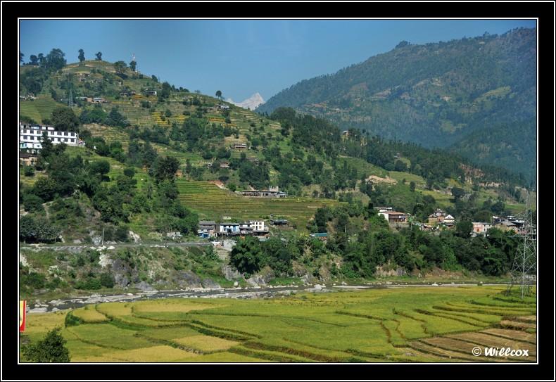 Népal - Novembre 2010 Yd0_9626
