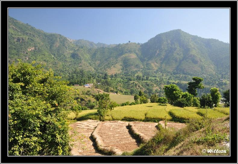 Népal - Novembre 2010 Yd0_9631