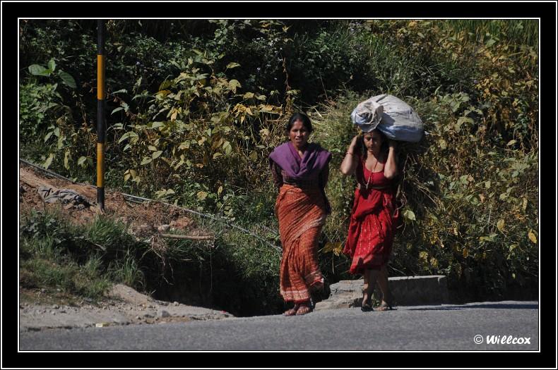 Népal - Novembre 2010 Yd0_9633