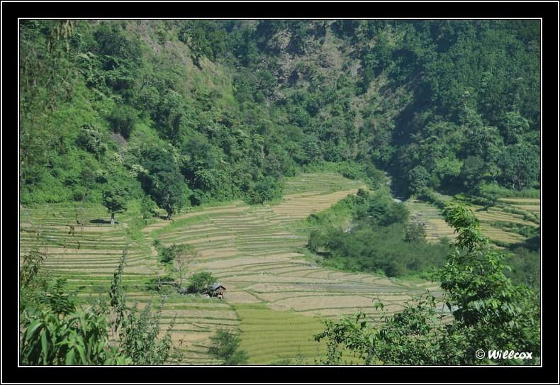 Népal - Novembre 2010 Yd0_9720
