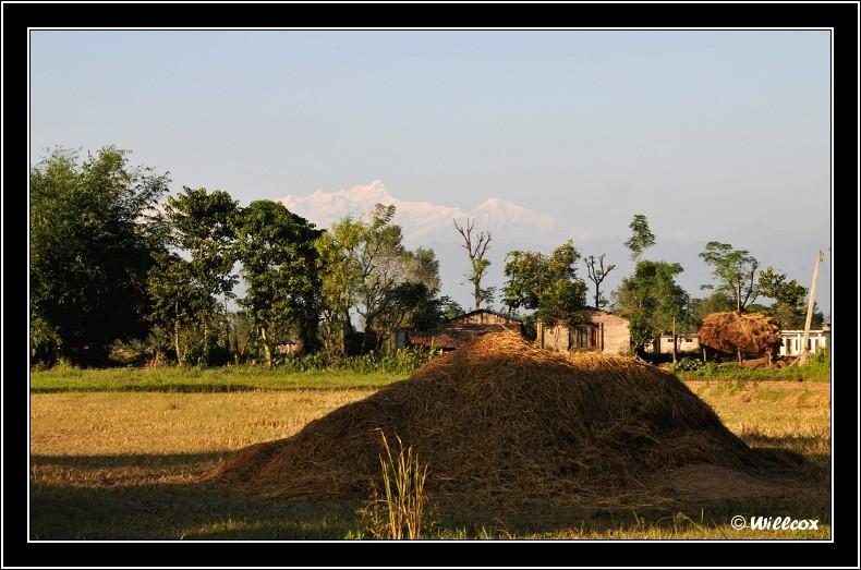 Népal - Novembre 2010 Yd0_9811