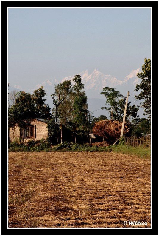 Népal - Novembre 2010 Yd0_9813