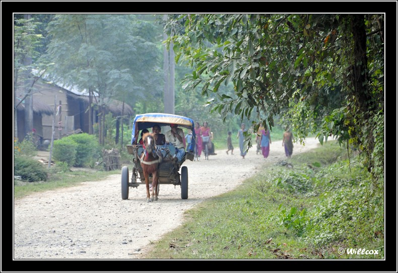 Népal - Novembre 2010 Yd0_9830