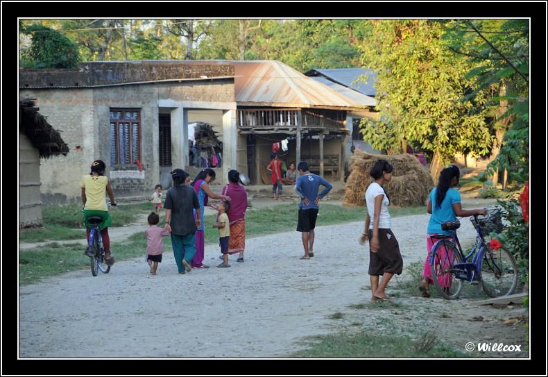 Népal - Novembre 2010 Yd0_9835