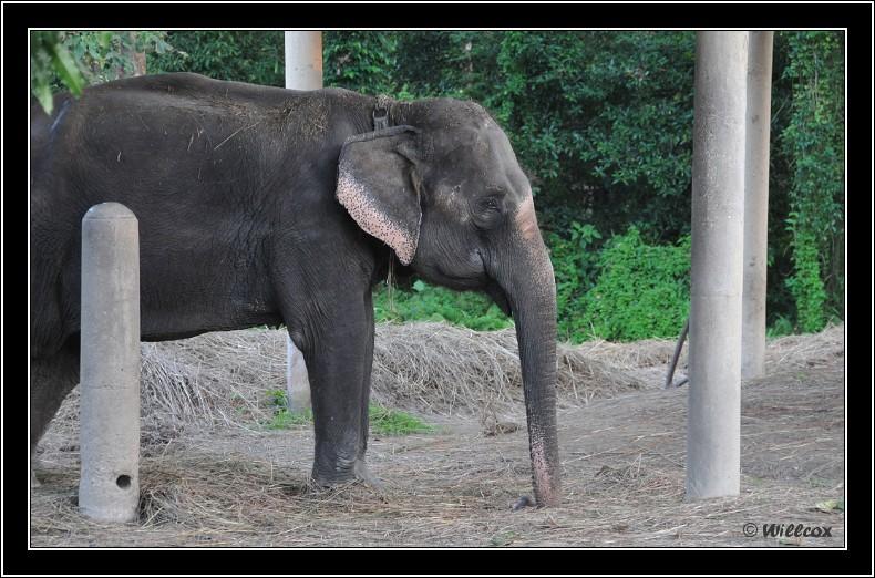Népal - Novembre 2010 Yd0_9837