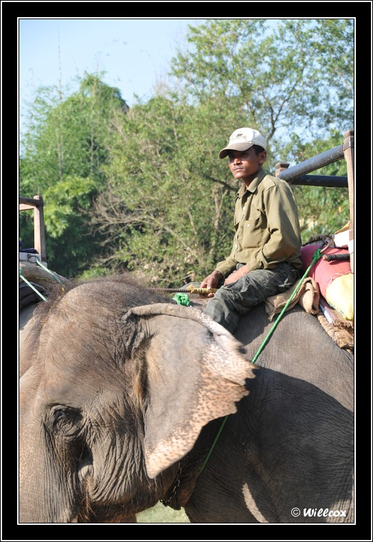 Népal - Novembre 2010 Yd0_9911