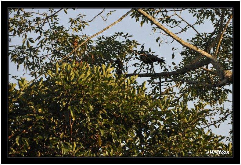 Népal - Novembre 2010 Yd1_0117