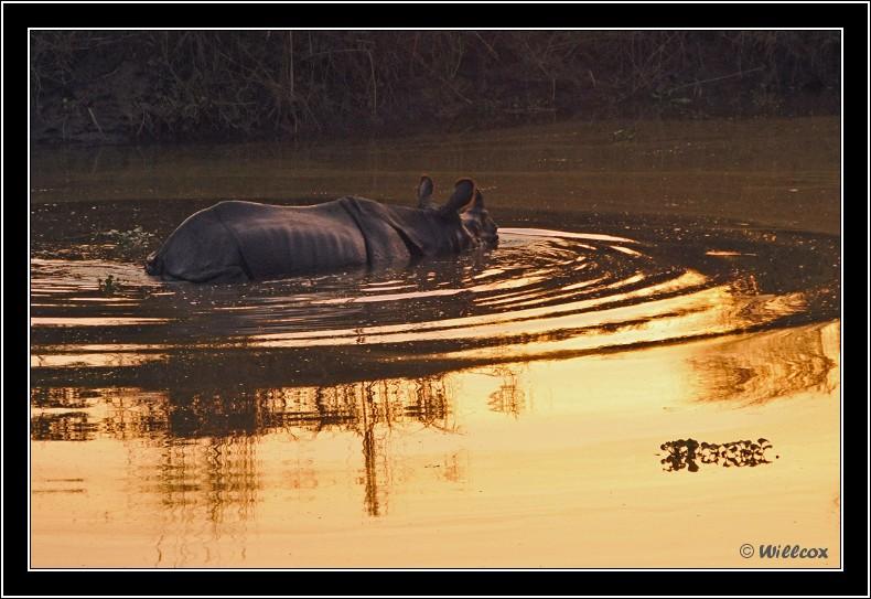 Népal - Novembre 2010 Yd1_0126