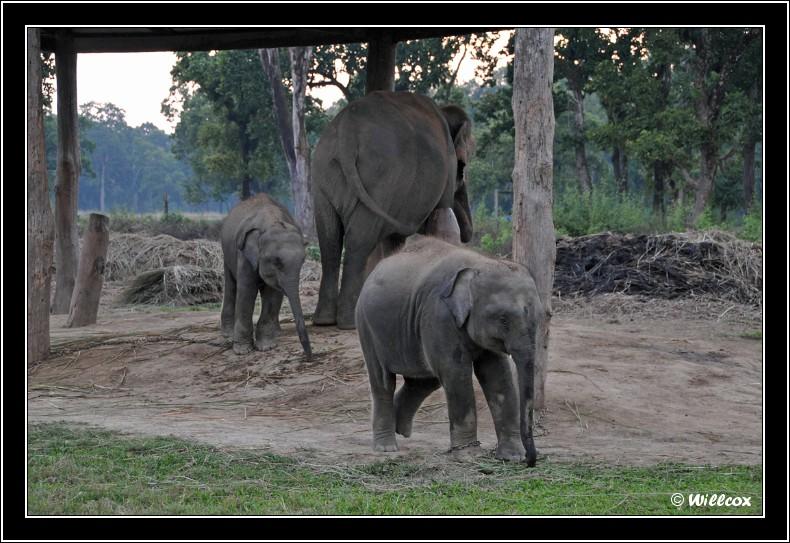 Népal - Novembre 2010 Yd1_0129