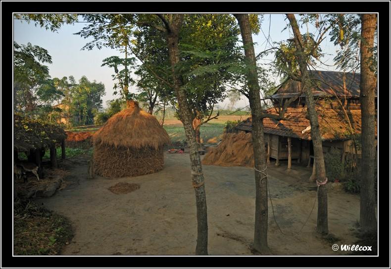 Népal - Novembre 2010 Yd1_0133