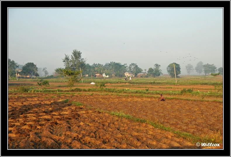 Népal - Novembre 2010 Yd1_0137