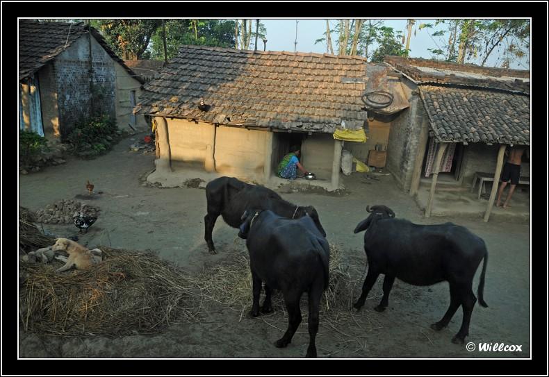 Népal - Novembre 2010 Yd1_0138