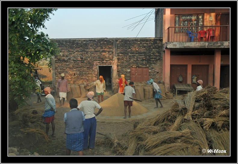 Népal - Novembre 2010 Yd1_0211
