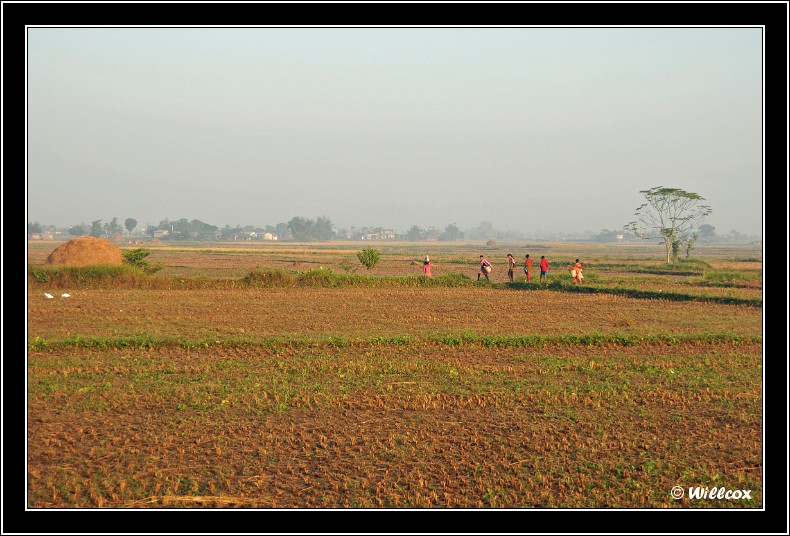Népal - Novembre 2010 Yd1_0214