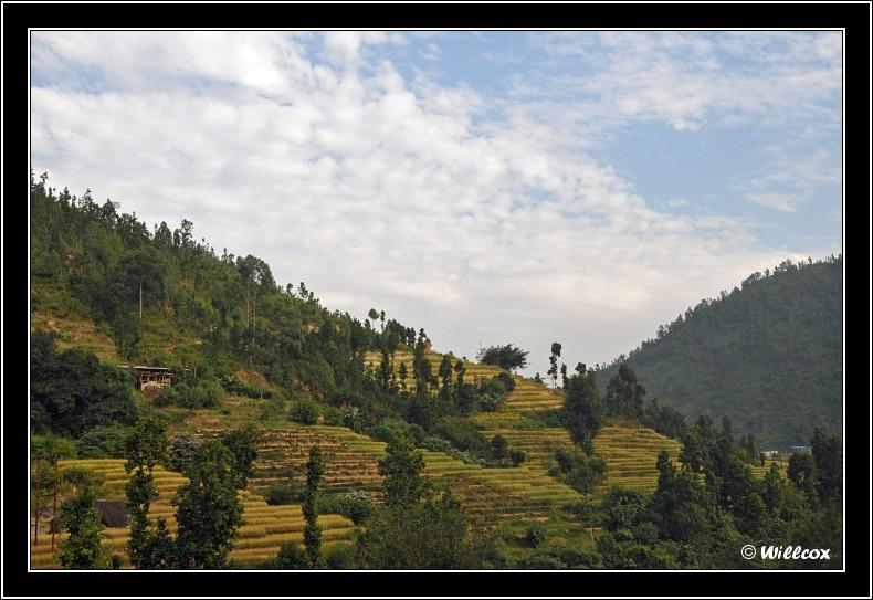 Népal - Novembre 2010 Yd1_0316