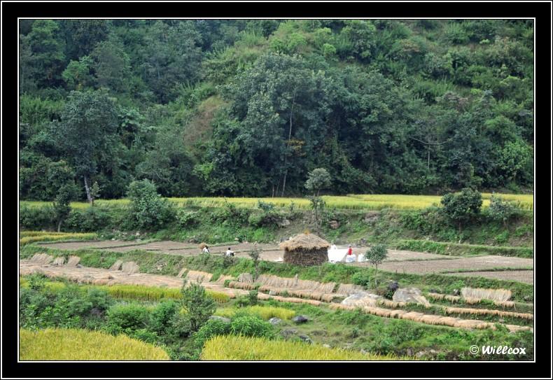 Népal - Novembre 2010 Yd1_0320