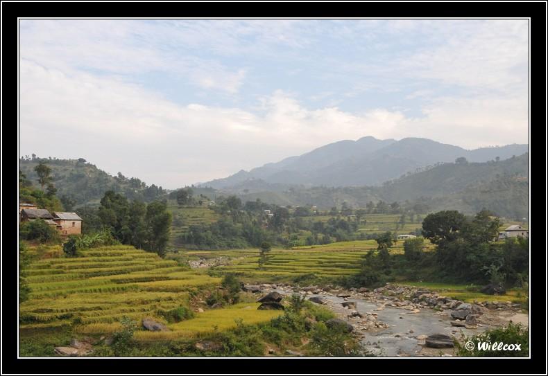 Népal - Novembre 2010 Yd1_0322