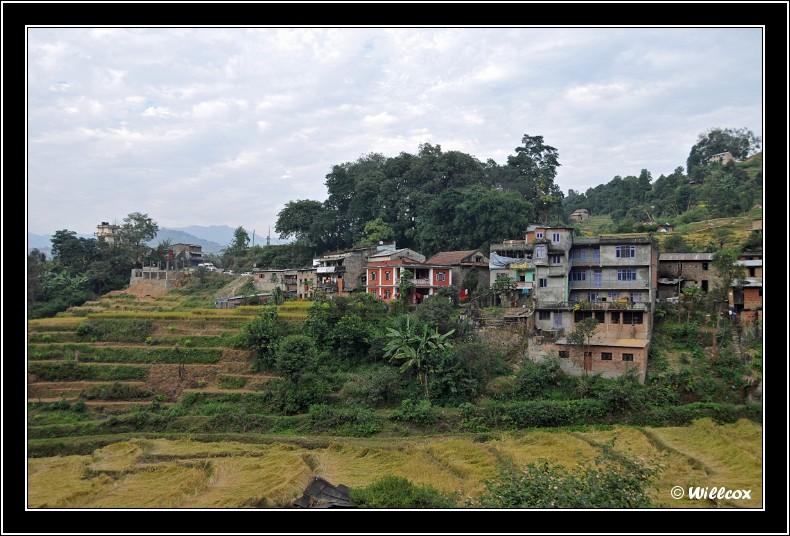 Népal - Novembre 2010 Yd1_0323