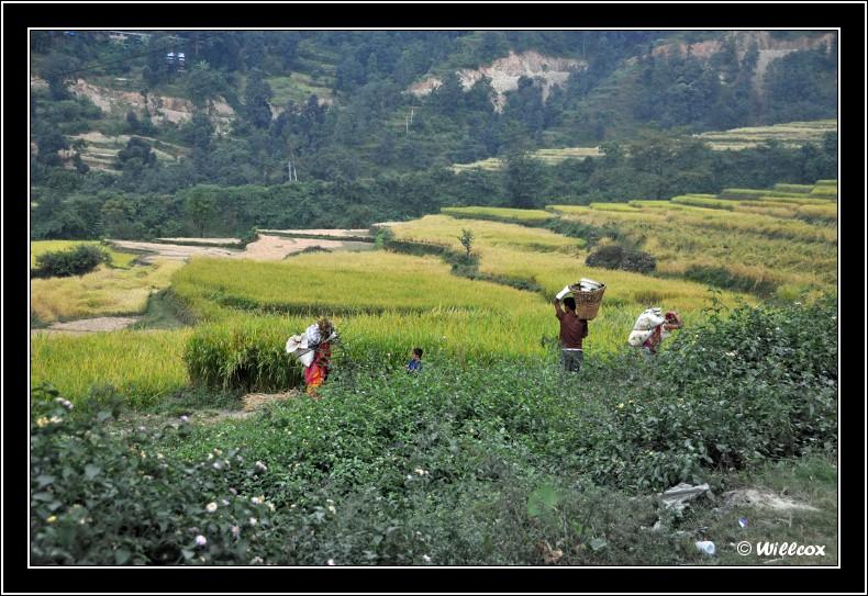 Népal - Novembre 2010 Yd1_0328
