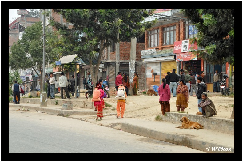Népal - Novembre 2010 Yd1_0419