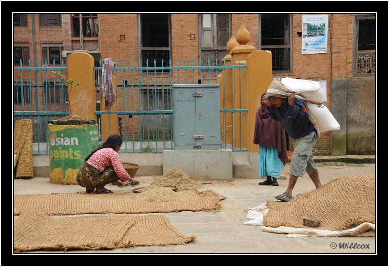 Népal - Novembre 2010 Yd1_0513