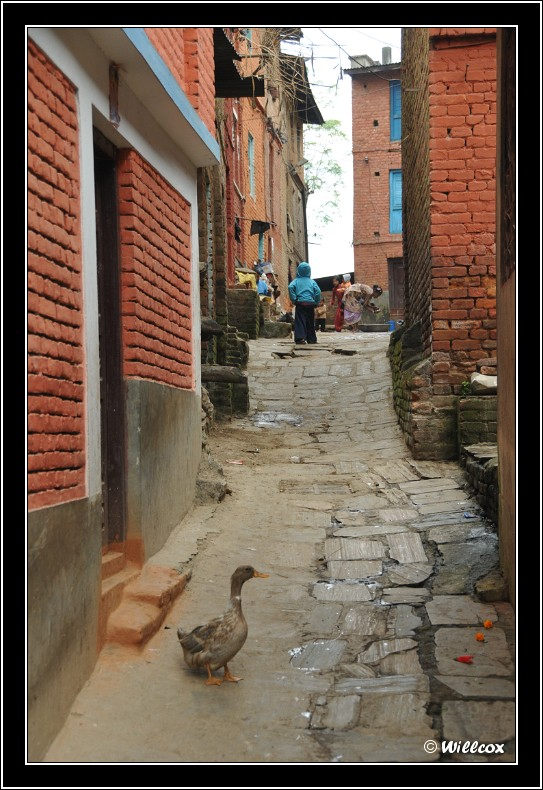 Népal - Novembre 2010 Yd1_0524
