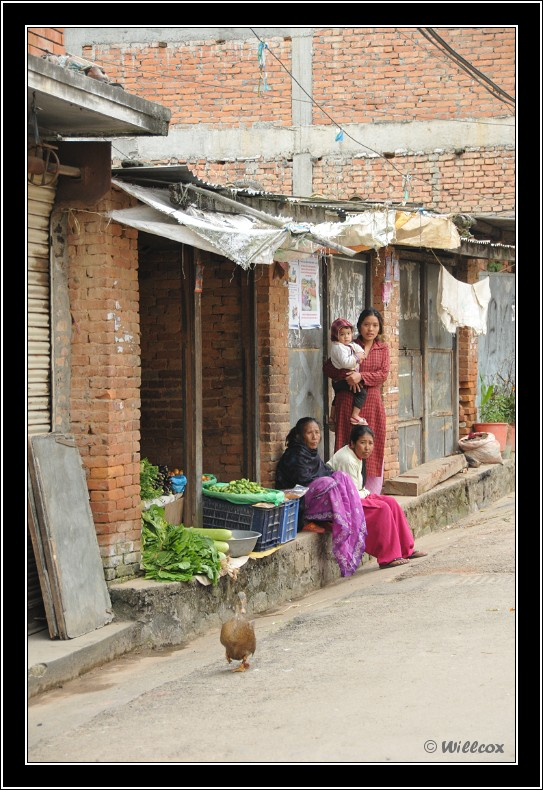 Népal - Novembre 2010 Yd1_0525