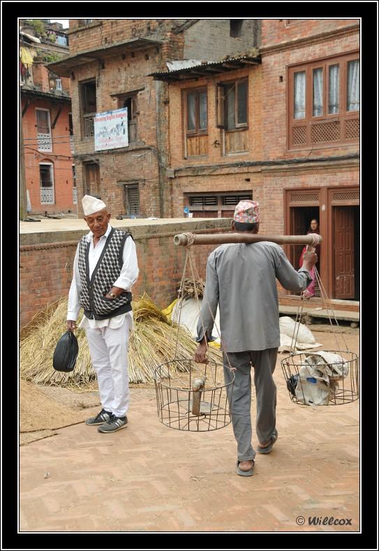 Népal - Novembre 2010 Yd1_0538