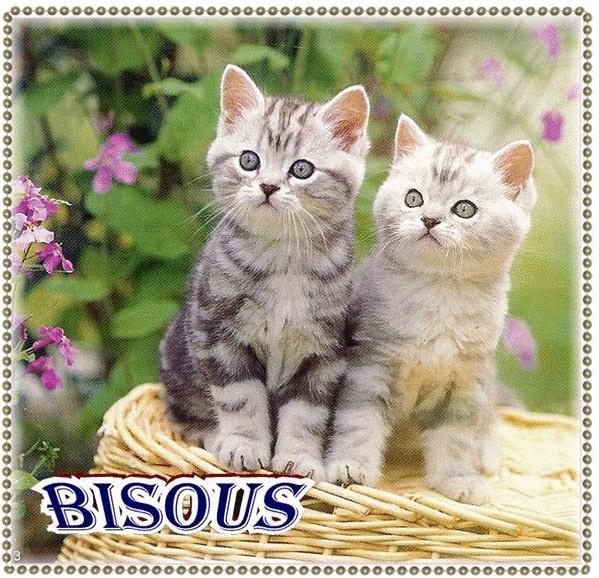 J'ai trois chatounettes... Chat_210