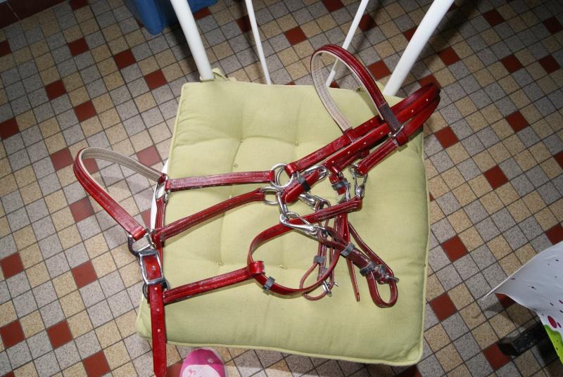 AV Bridon/licol norton + rênes couleur BORDEAUX Dsc05610