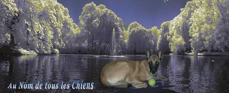 Association Au Nom de tous les Chiens W822001818