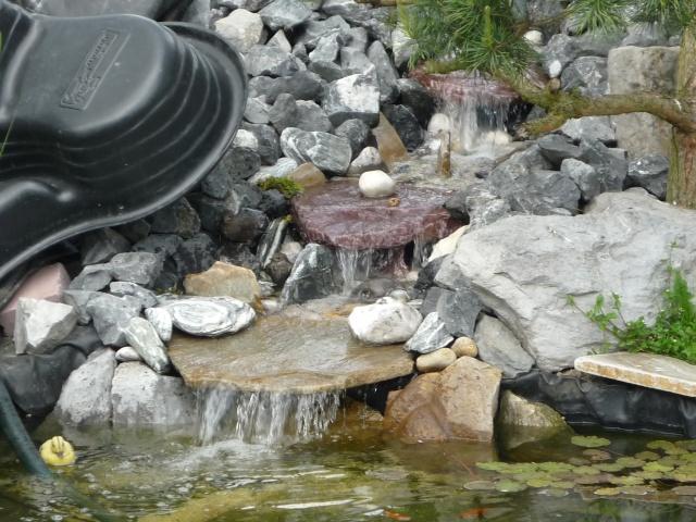 bébé merle adore le bassin P1030832