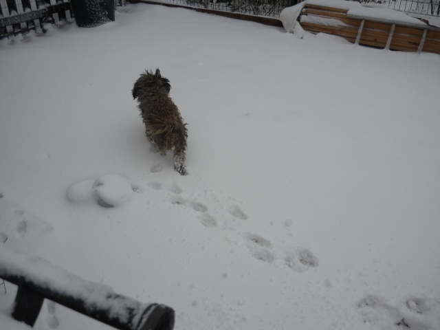 les filles dans la neige P1040715