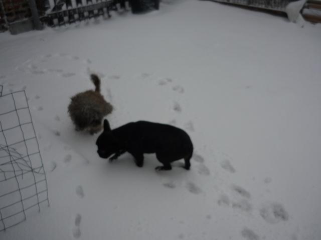les filles dans la neige P1040716