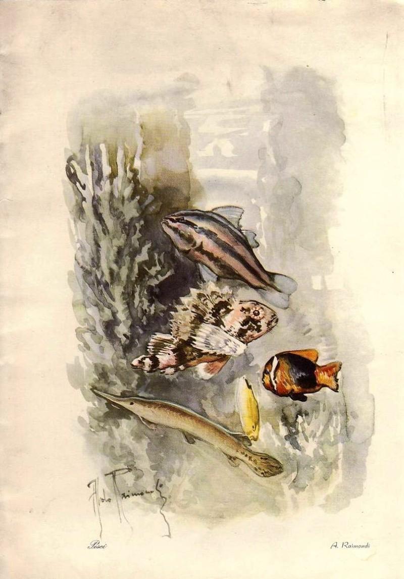'Vulcania' - Cosulich - 1928 25_nav20