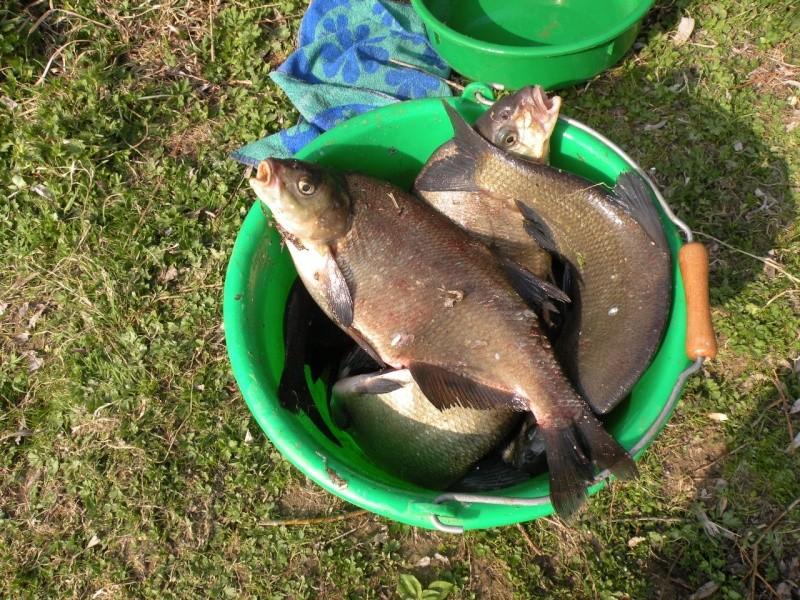 Carnet de pêche de Max62 Dscn8915