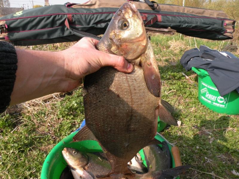 Carnet de pêche de Max62 Dscn8916