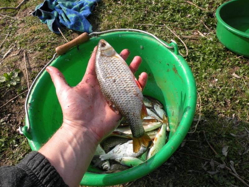 Carnet de pêche de Max62 Dscn8917