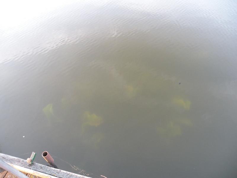 Carnet de pêche de Max62 Dscn8929