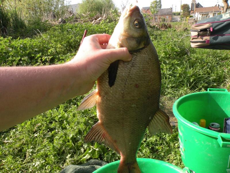 Carnet de pêche de Max62 Dscn8931
