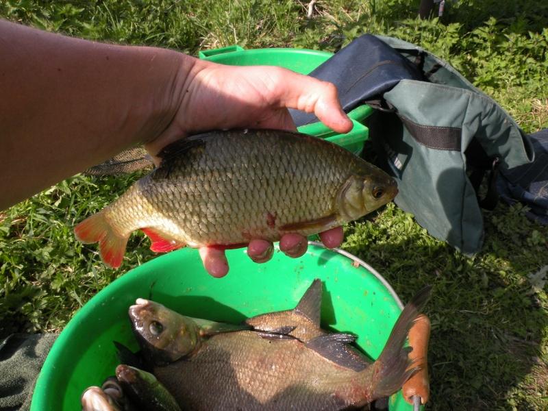 Carnet de pêche de Max62 Dscn8933