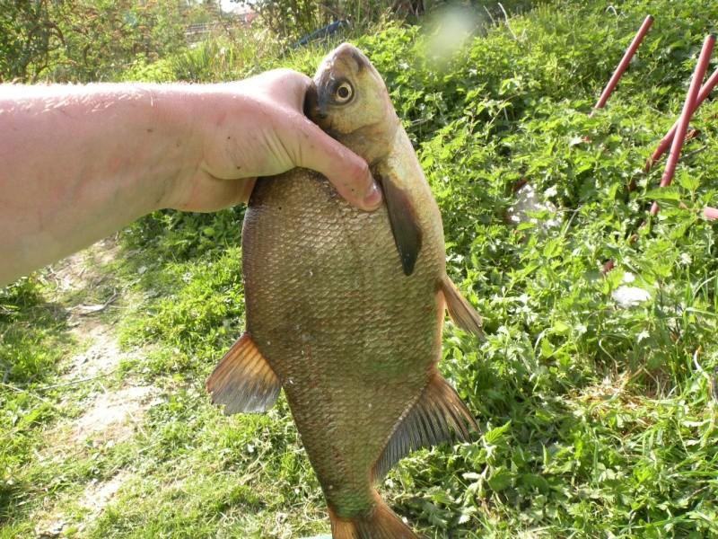 Carnet de pêche de Max62 Dscn8934