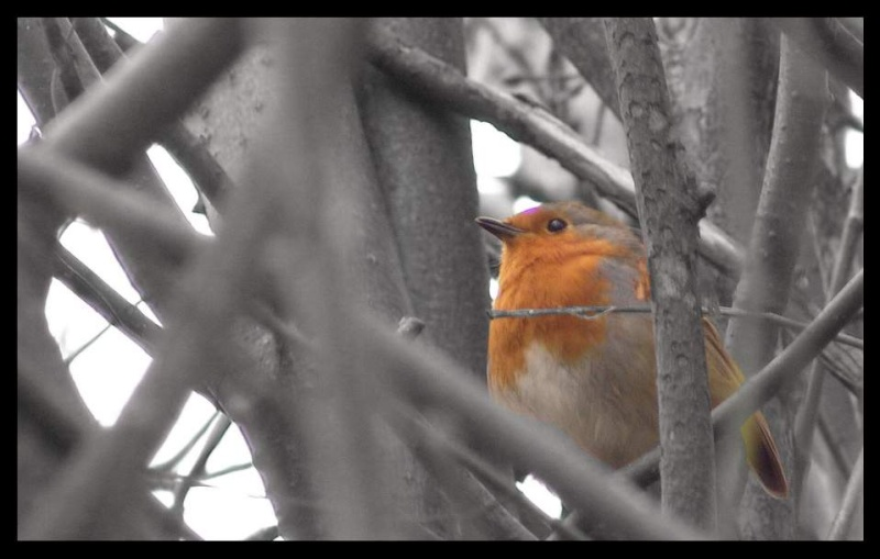 The Winter Photography Thread - Page 3 Robin10