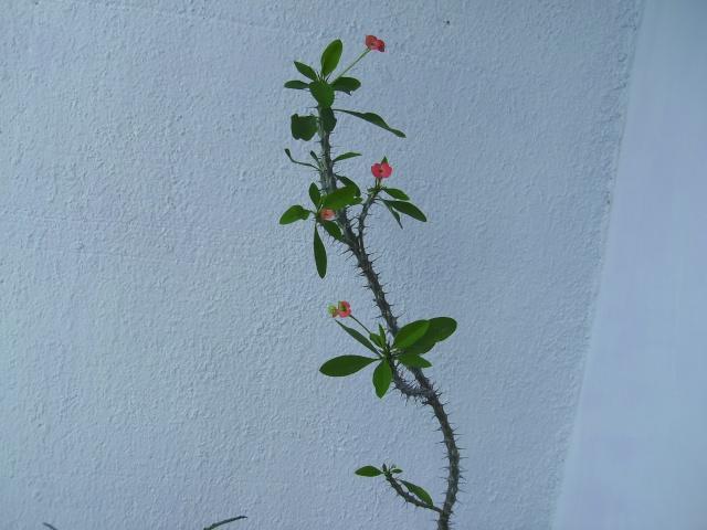 Покажете цветята във  вашата градинка... Imgp0561