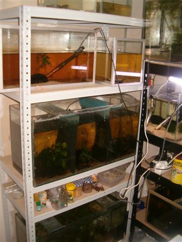 Fishroom de jm8021 Photo_21