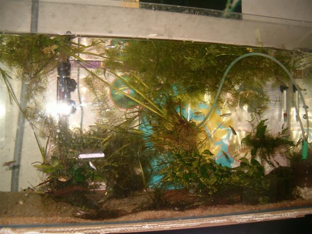 Fishroom de jm8021 Photo_23