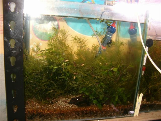 Fishroom de jm8021 Photo_29