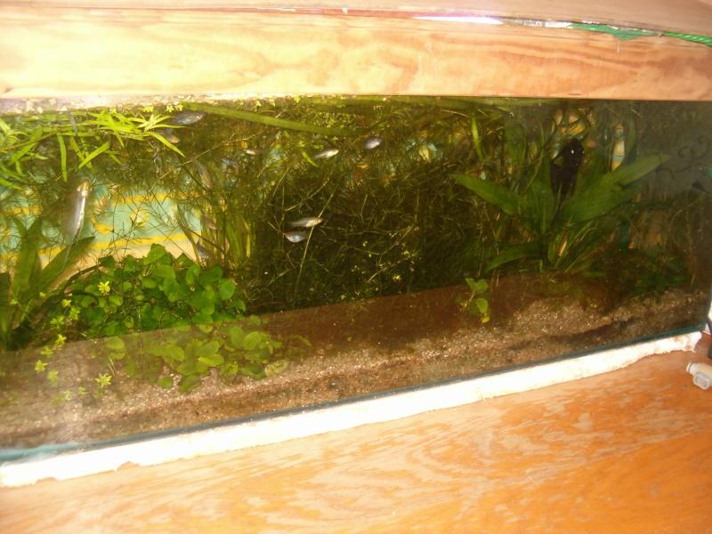Fishroom de jm8021 Photo_40
