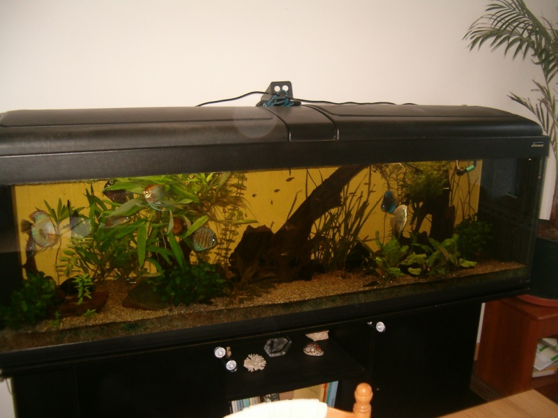 Fishroom de jm8021 Photo_41