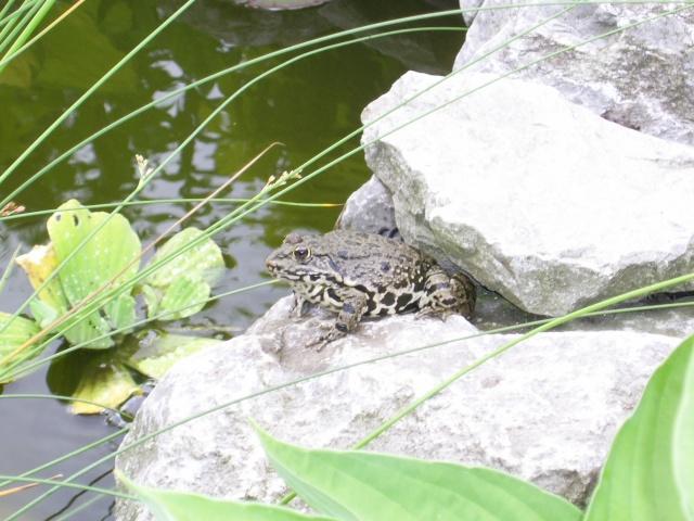 votre photo pour Juin 2009 00517